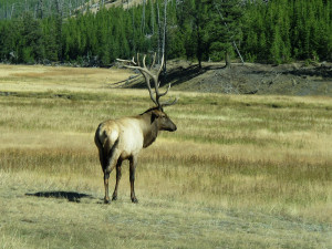 Elk -- The illusion